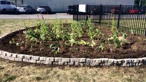 Finished rain garden